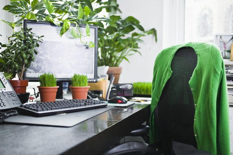 Kako da negujete biljke u kancelariji: 4 praktična saveta!