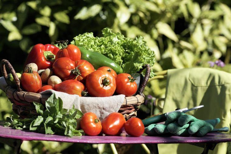 Ovako se pravi organsko đubrivo: Bašta će vam bujati bez otrova i pesticida!