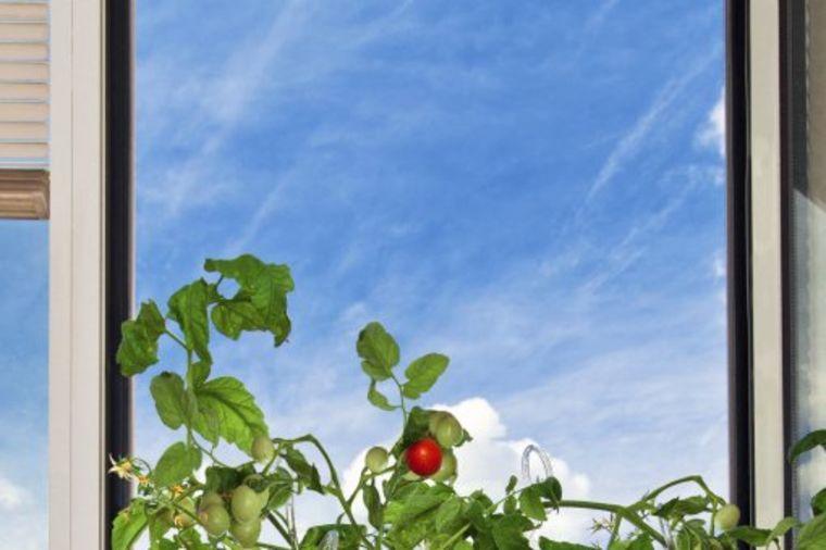 Gajite povrće na vašoj terasi: Čarobni balkon pun zrelih plodova (FOTO)!  Li...