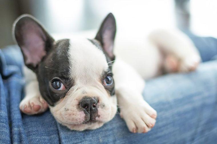 Ljubimci vas uče važnoj lekciji: Ovu greška ljudi stalno prave, ali psi nikada!