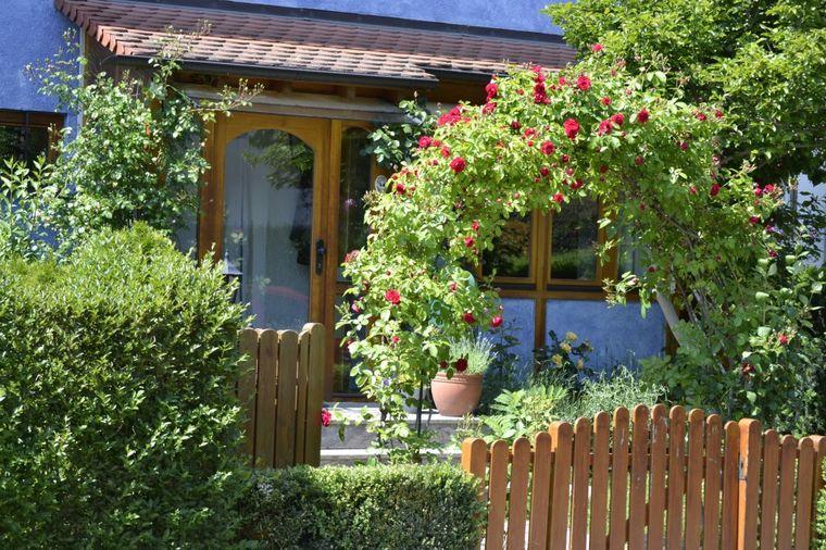 Vaše ruže najlepše u komšiluku: 12 saveta za pravilnu negu!