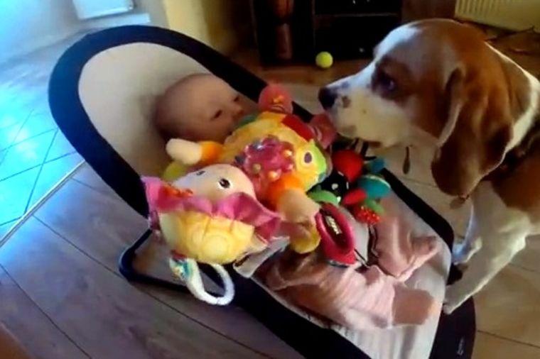 Najslađe izvinjenje na svetu: Pas bebi ukrao igračku, pa se pokajao! (VIDEO)