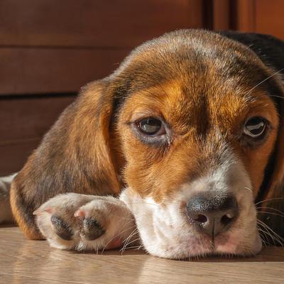 Sedi pred bolnicom i čeka preminulog vlasnika: Pas Maša tuguje već dve godine i gleda u ista vrata!