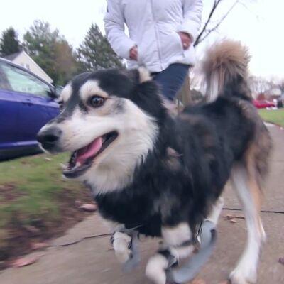 Prvi put potrčao: Pas rođen sa deformitetom dobio proteze zahvaljujući 3D štampaču! (VIDEO)