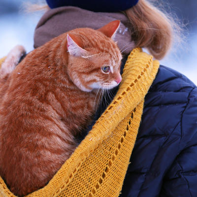 Mačke i komunikacija: Mjauču samo kada se obraćaju ljudima! (VIDEO)