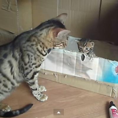 Nasmejaće vas: Kad mama maca priča sa mačićima! (VIDEO)
