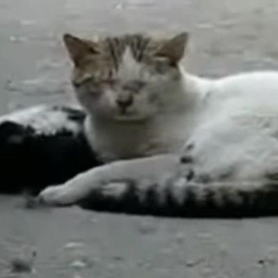 Hajde, druže, vrati se: Očajnička borba mačke da oživi prijatelja rasplakala je svet! (VIDEO)