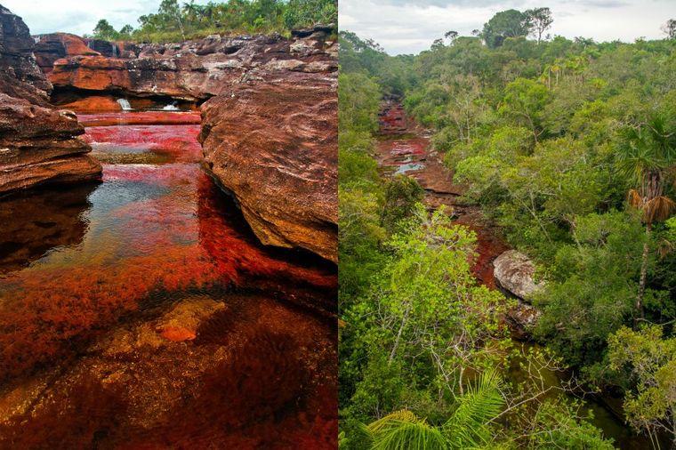 Najlepša reka na svetu: Kanjo Kristales u srcu Kolumbije! (FOTO)