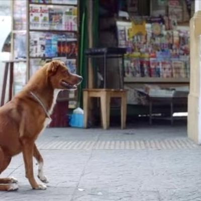 90 srceparajućih sekundi: Pas verno čeka, dok se deda bori za život! (VIDEO)