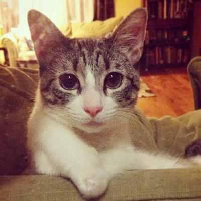Mačka koja inspiriše svet: Njena tužna priča će vas naučiti ozbiljnoj lekciji!
