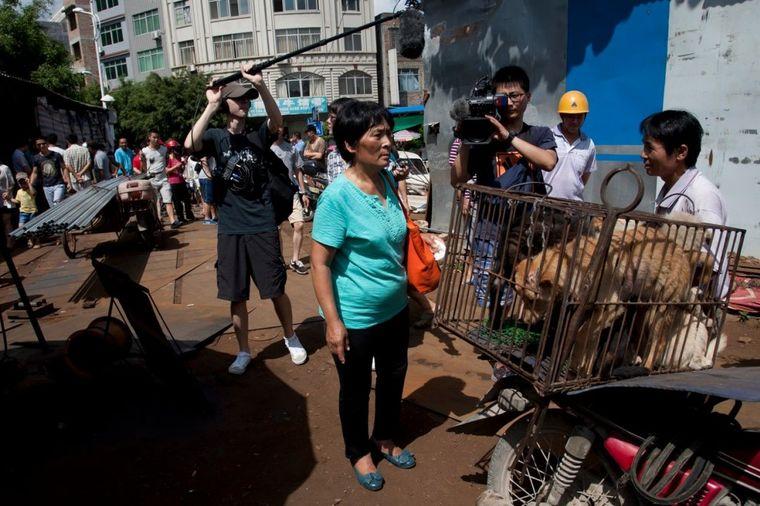 Žena heroj: Spasila 100 pasa da ne budu pojedeni na festivalu! (FOTO, VIDEO)