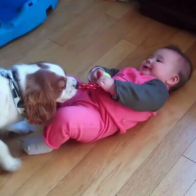 Najslađa borba: Ko je jači, bebe ili psi? (VIDEO)