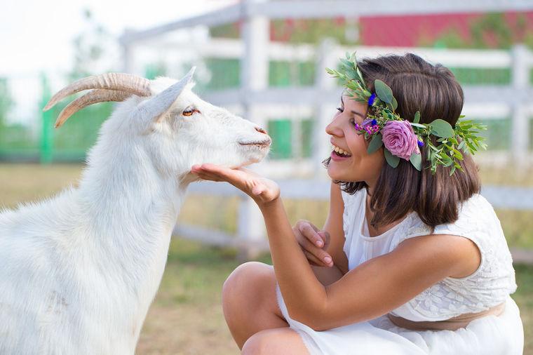 Zašto je kozje mleko toliko zdravo: Malo kalorija, mnogo lekovitih svojstava!