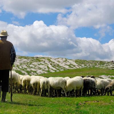 Kako je pastir izgubio najboljeg prijatelja: Nećete ostati ravnodušni!