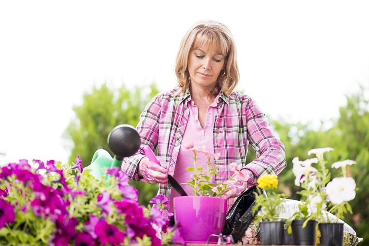 Kako da uzgajate lozicu brojanicu: Sobna biljka koju je najlakše održavati! (FOTO)
