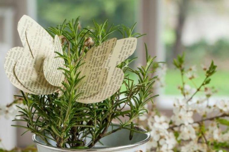 Samim mirisom leči alergiju: 7 neverovatnih svojstava ruzmarina!