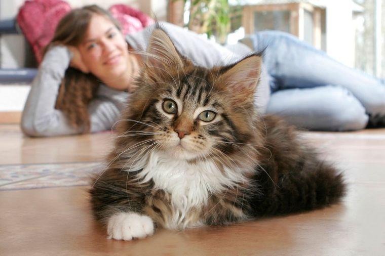 Kako vam maca poručuje da vas voli: Ovo ste sigurno barem jednom doživeli!