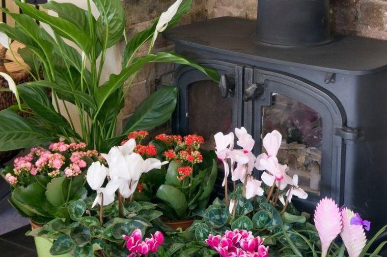 5 sobnih biljaka koje cvetaju samo zimi: Čiste vazduh, obavezne u svakom domu! (FOTO)