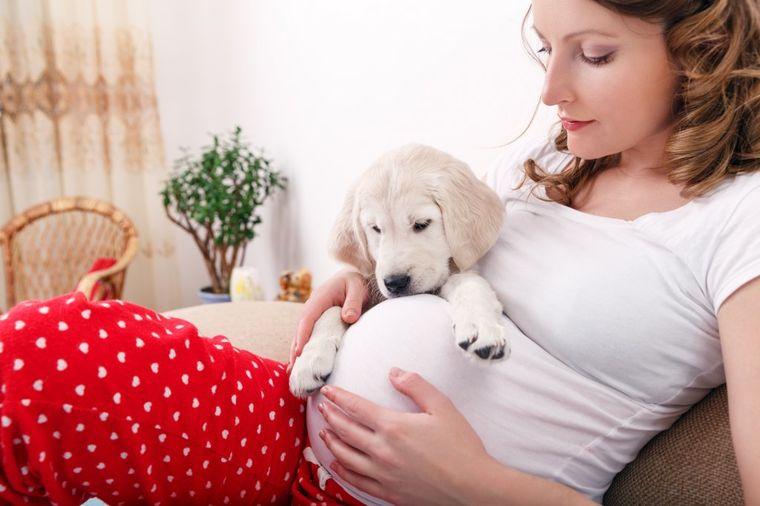 Pas spasao trudnicu od pobačaja: Nanjušio nevolju, počeo da laje u sred noći!