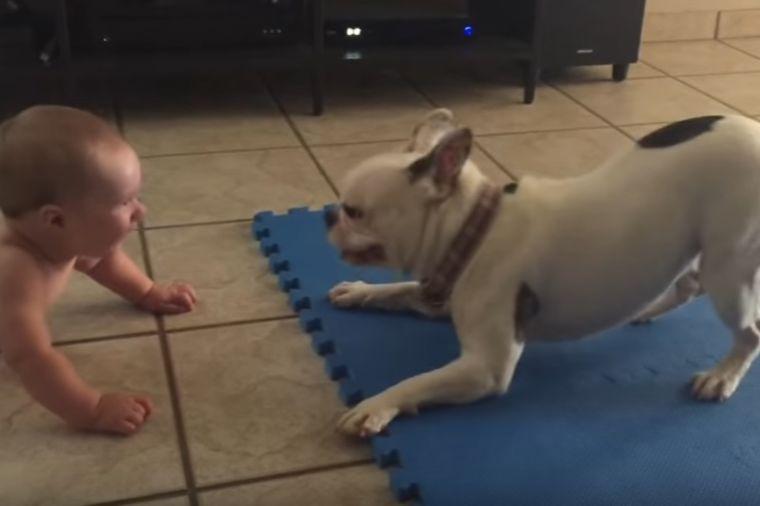 Situacija koja se pamti: Buldog čini sve da nasmeje bebu! (VIDEO)