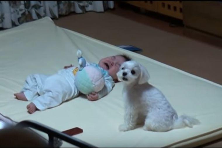 Beba je počela da plače: Pogledajte neverovatnu reakciju psa! (VIDEO)