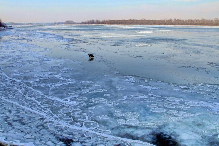 Skočio u zaleđeni Dunav da spasi psa: Heroj o kojem bruje društvene mreže! (FOTO)