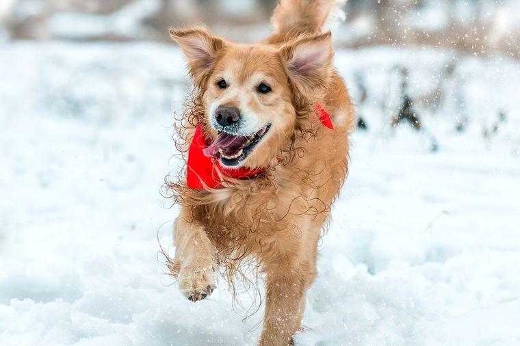 Nepogrešiv instinkt: Pas može da prepozna zlu svekrvu!