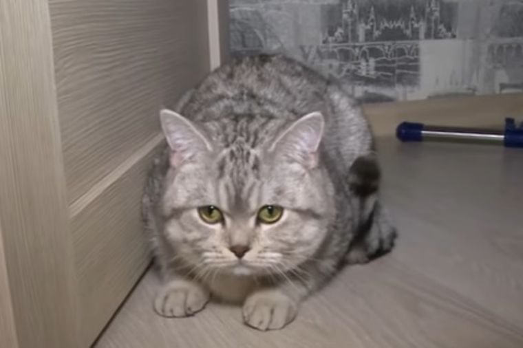 Prodao mačka jer veruje da ima natprirodne moći: On je upravljao mojim životom! (FOTO)