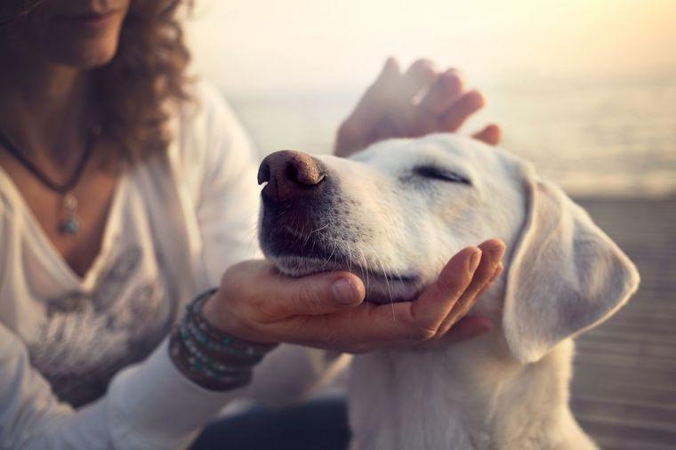 Dresirajte psa kao profesionalac: Ovo može da mu spase život!