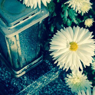 Da se ne ogrešite: Ovo cveće se sutra nosi na groblje!