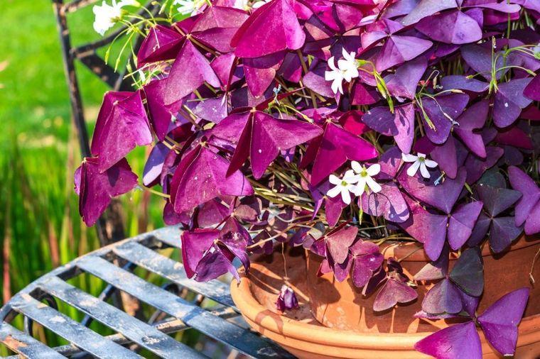 Srećno cveće koje noću spava: Ovu biljku morate imati u domu!