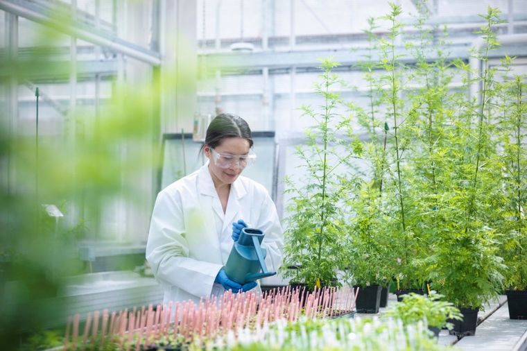 Američki naučnici sigurni da ova biljka uništava rak za 16 sati: Raste po celoj Srbiji!