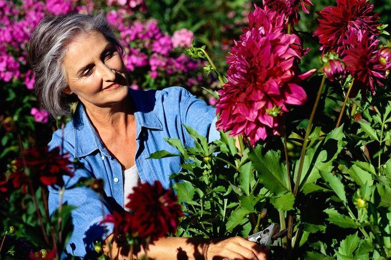 Koren može da izleči rak, a cvet srce i dijabetes: Zašto ovu biljku stalno bacamo?!