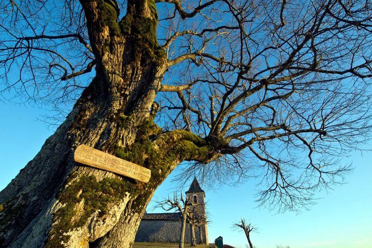 Svaka kuća mora u svom dvorištu da ima ovo drvo: Donosi blagostanje celoj porodici!