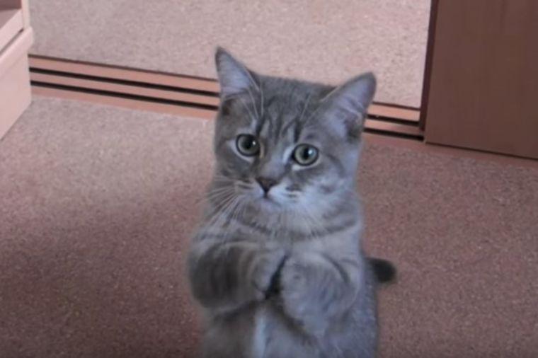 Maca traži hranu