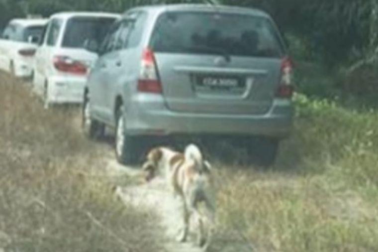 Pas je kilometrima pratio povorku: Priča od koje bi i kamen pustio suzu! (VIDEO)