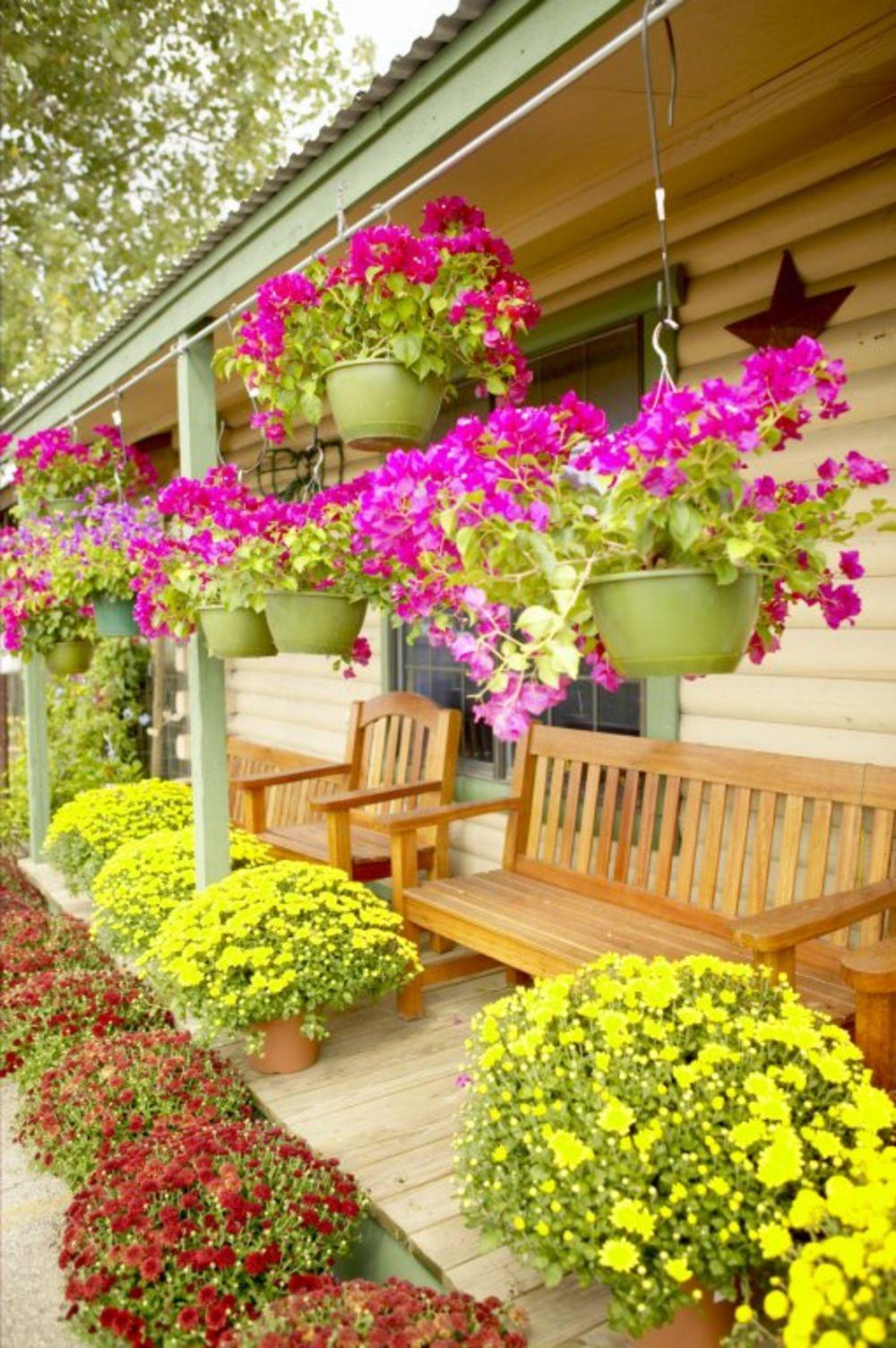 Ovo balkonsko cve e uspeva svima cveta od prole a do for Ideas para arreglar un jardin pequeno