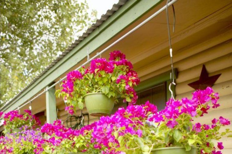 Ovo balkonsko cveće uspeva svima: Cveta od proleća do jeseni i ne smeta mu ništa! (FOTO)