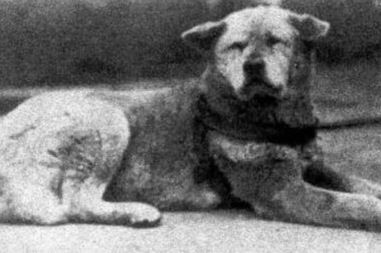 Priča o najvernijem psu na svetu: Milioni su žalili nad njegovom sudbinom! (FOTO)