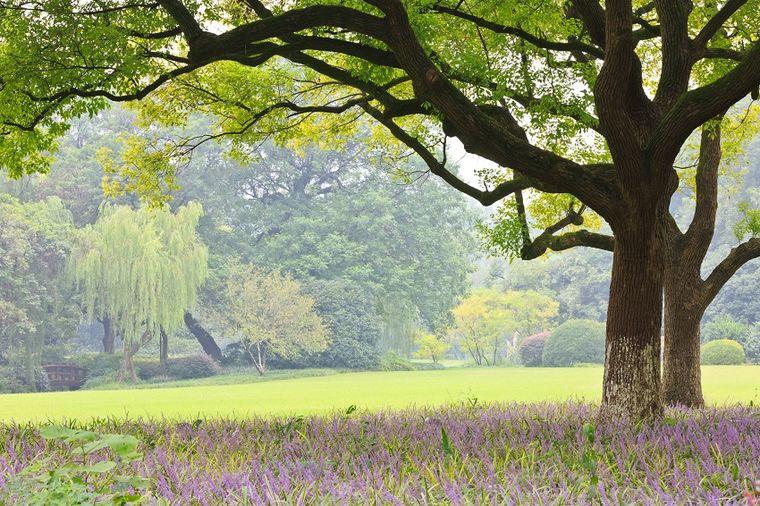 Tri dana pravog proleća: Vreme do kraja aprila nestabilno, ali toplo!