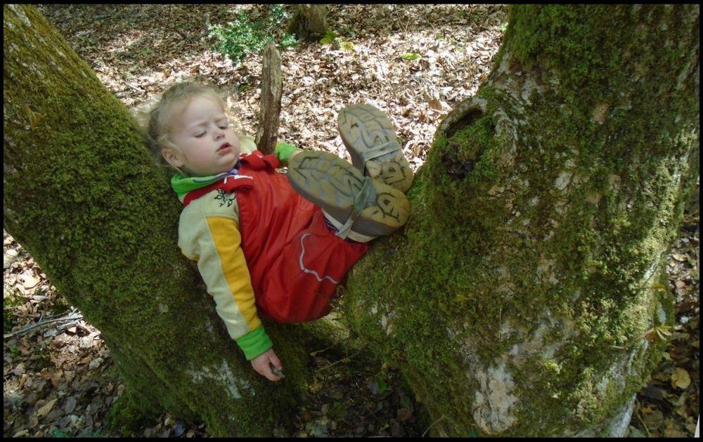 Ako dete želi da odspava, može to da uradi na drvetu ili pod drvetom. Foto: Profimedia
