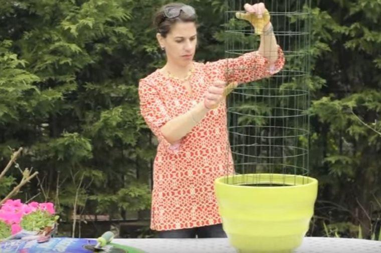 U saksiju je stavila žičanu ogradu: Krajnji rezultat poželećete da imate odmah! (VIDEO)