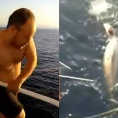 Zarobljenom kitu pretila smrt: O postupku hrabrog mornara bruji ceo svet! (VIDEO)