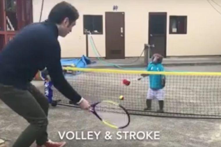 Majmunu dali teniski reket: Svojom reakcijom oduševio pola miliona ljudi! (VIDEO)
