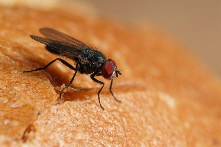 Nikad ne smete da okusite hranu na koju je stala muva: Ozbiljno upozorenje naučnika!