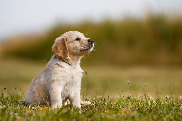 Ovi psi nisu najbolji ljubimci ako imate decu: Vodite računa!