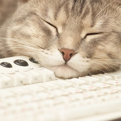 Japanci iskorenili stres na poslu: Mačke i koze im šetaju po kancelarijama!