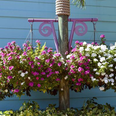 Idealno cveće za terasu u hladu: Cveta i širi se velikom brzinom! (FOTO)