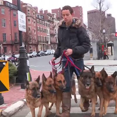 Šetao 6 pasa: Kada im je skinuo povodac, prolaznici ostali u šoku! (VIDEO)