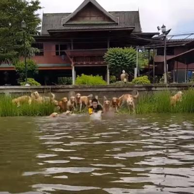 Skočio u vodu i počeo da pliva: Ono što je 16 retrivera uradilo zapanjilo je sve! (VIDEO)